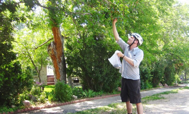 Photo of The Most Common Edible Fruit Trees in Wisconsin